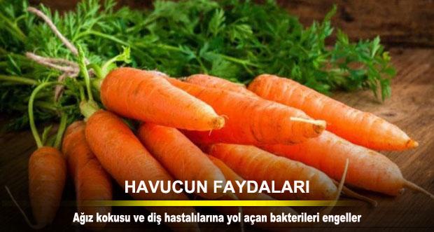 HAVUCUN FAYDALARI
