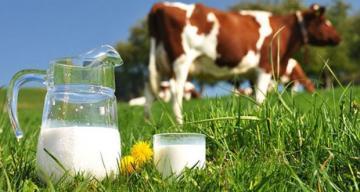 Ticari süt işletmelerince Nisan ayında 847 bin 19 ton inek sütü toplandı