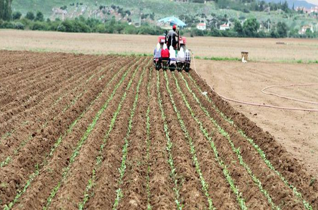 Tarım- ÜFE Mayıs ayında %0,95 azaldı