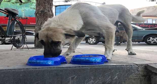 Sokak Hayvanlarına Yardım Eli