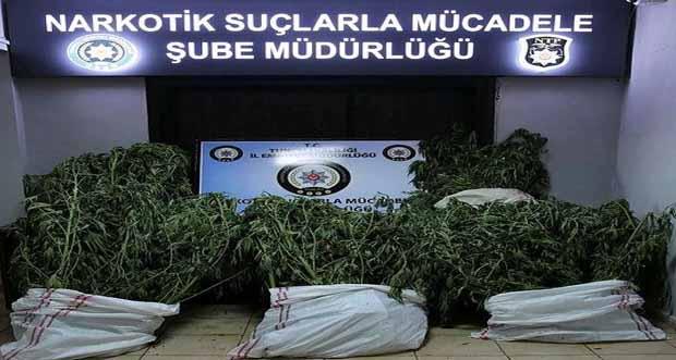 TUNCELİ'DE NARKOTİK OPERASYONU